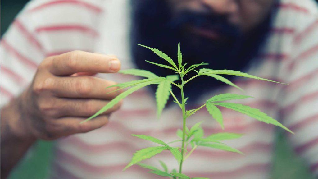 Purchase Potent Medical Marijuana in Tulsa, Oklahoma | Whole